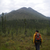 Tree-ring sampling along the Haul Road